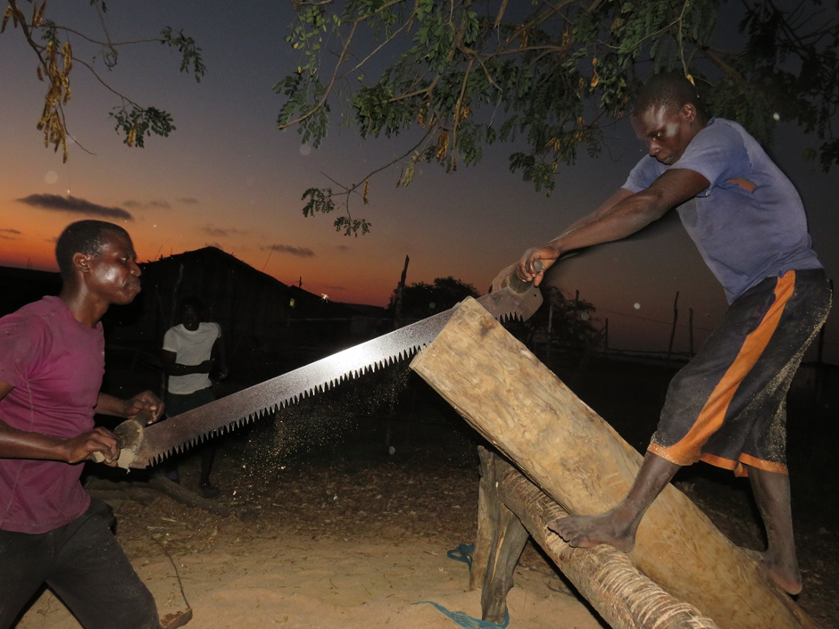 Sawing Cutting Mangrove Trunks for Wood, August 2019