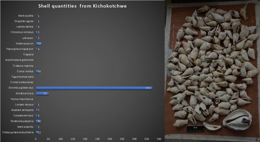 Graph Showing Counts of shell fish recorded at Kichokochtwe from two test pits