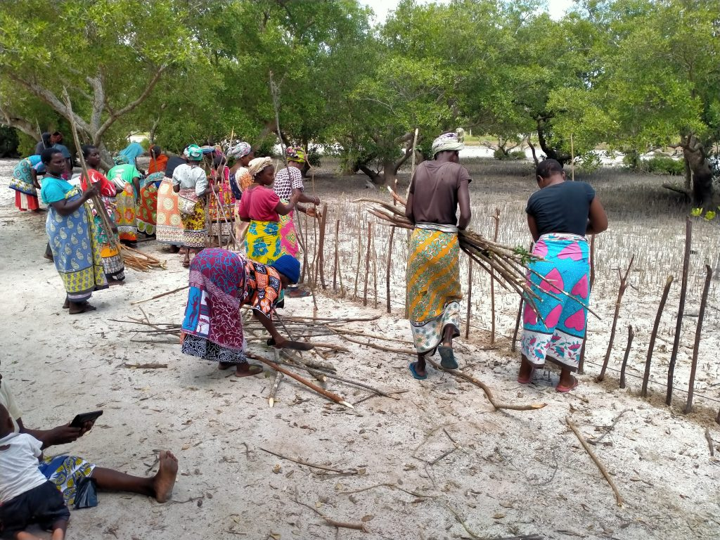 Bidii na kazi plot making and fencing