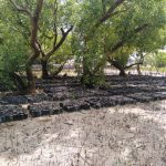Mangrove field