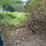 Chairman Mtwapa Beach Management Unit, stunned after discovering an indigenous tree has been cut down by unknown persons