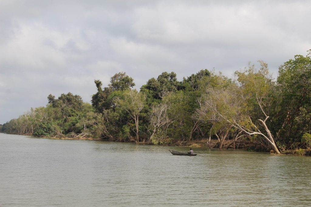 Chinde Mangrove Forest (Chinde River Bank)