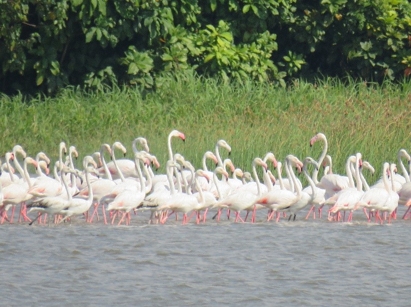 Flamingos along the Chinde River, at the confluence between the salty and sweet waters.